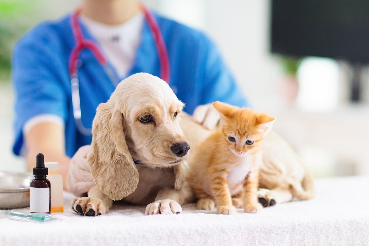Jeevoka - What Is Important to Remember About Pet Vaccinations?